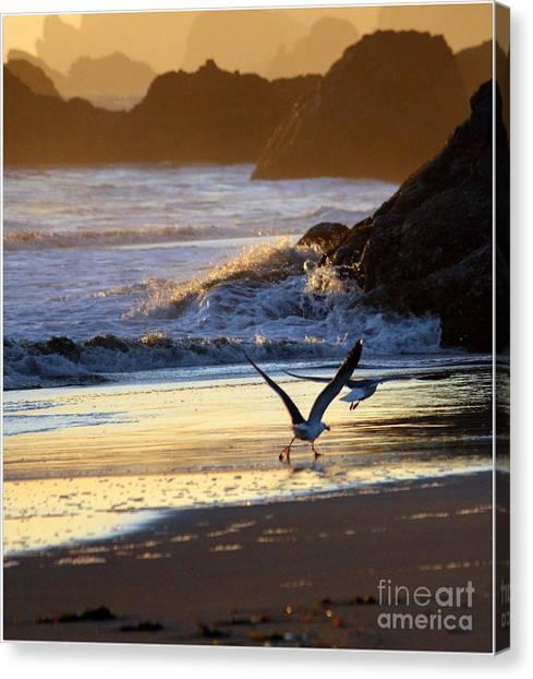 Seagulls On Beach Canvas Print by Irina Hays