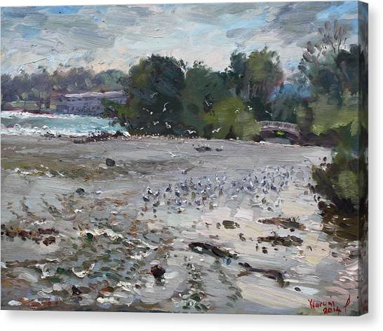 Seagulls Canvas Print - Seagulls On Niagara River by Ylli Haruni