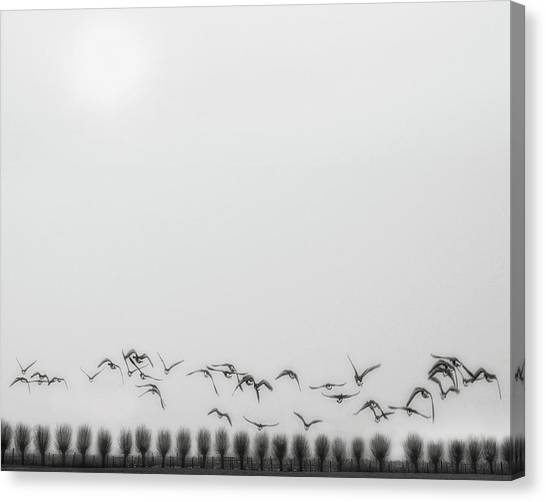 Seagulls Canvas Print - Seagulls Over The Fields by Yvette Depaepe
