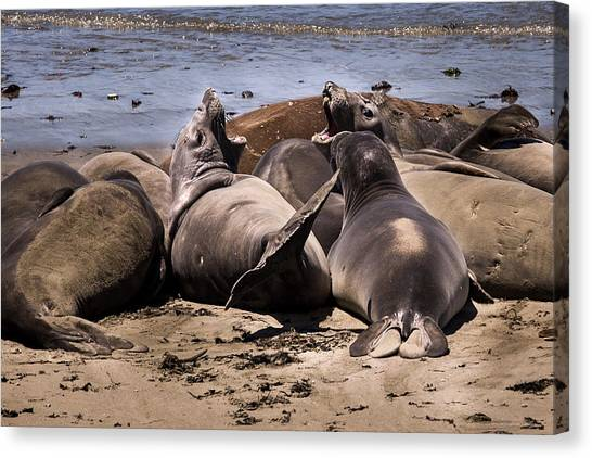 Seal Team 3 By Denise Dube Canvas Print