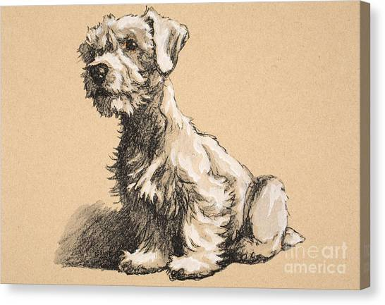 Dog Canvas Print - Sealyham by Cecil Charles Windsor Aldin