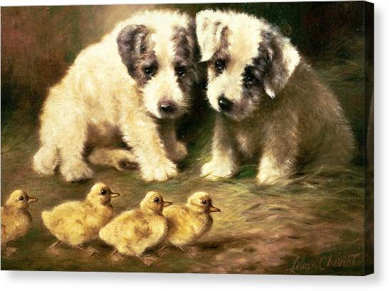 Too Canvas Print - Sealyham Puppies And Ducklings by Lilian Cheviot