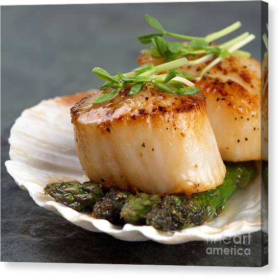 Asparagus Canvas Print - Seared Scallops by Jane Rix