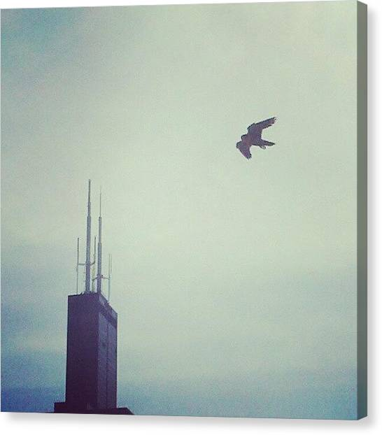 Sears Tower Canvas Print - Sears And The Falcon by Jill Tuinier