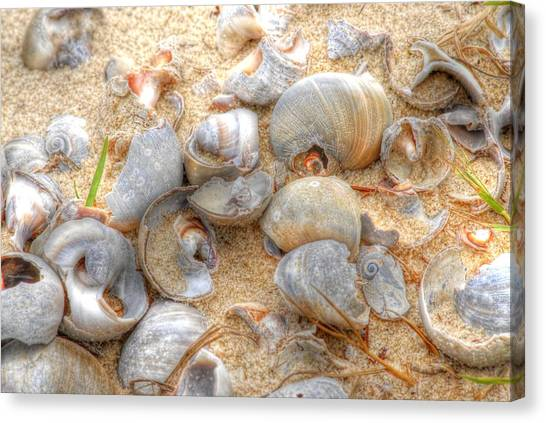 Seashell 01 Canvas Print