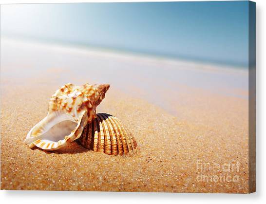 Sands Canvas Print - Seashell And Conch by Carlos Caetano
