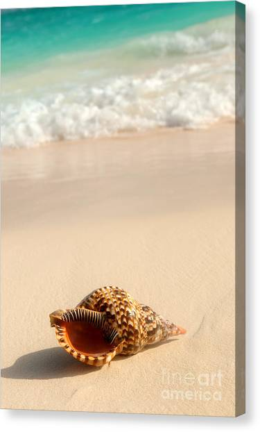 Sands Canvas Print - Seashell And Ocean Wave by Elena Elisseeva
