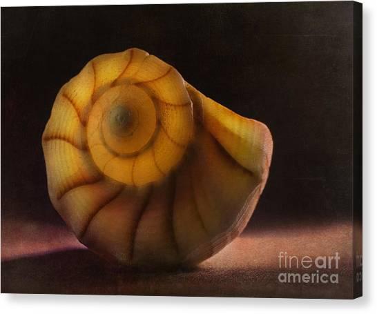 Seashell Canvas Print by Elena Nosyreva