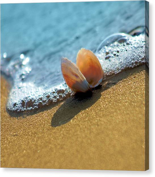 Seashell On The Coast With Wave And Bubble Canvas Print