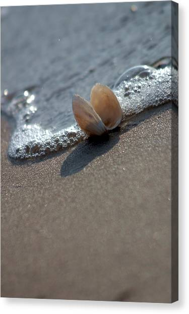 Seashell On The Coast With Wave Canvas Print