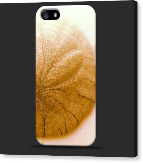 Seashells Canvas Print - #seashell #sanddollar #iphone #case by Tarant Photography