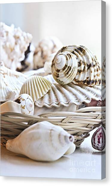 Clams Canvas Print - Seashells by Elena Elisseeva