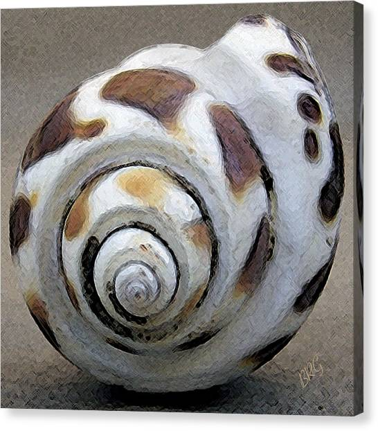 Seashells Spectacular No 2 Canvas Print