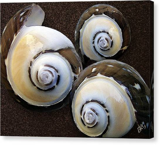 Seashell Fine Art Canvas Print - Seashells Spectacular No 23 by Ben and Raisa Gertsberg