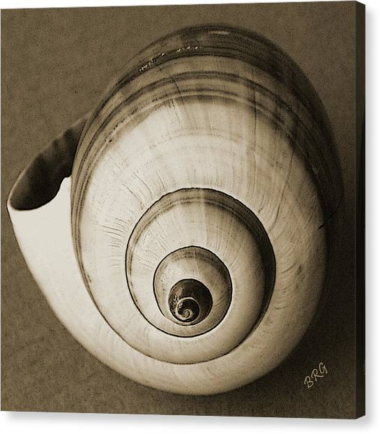Seashells Spectacular No 25 Canvas Print