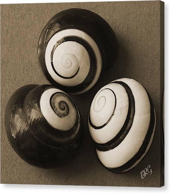 Seashell Fine Art Canvas Print - Seashells Spectacular No 28 by Ben and Raisa Gertsberg