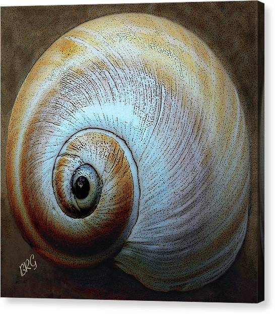 Sealife Canvas Print - Seashells Spectacular No 36 by Ben and Raisa Gertsberg