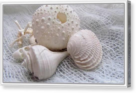 Seashells Study 1 Canvas Print
