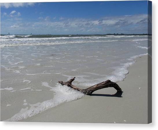 Seashore Driftwood Canvas Print by Rosie Brown