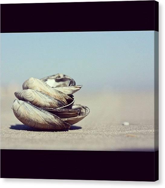 Seashells Canvas Print - Seashore Seashells :) by Stephanie Tomlinson