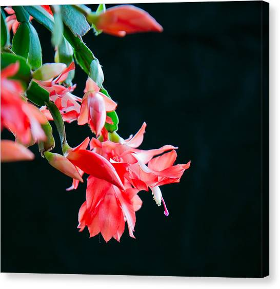 Seasonal Bloom Canvas Print