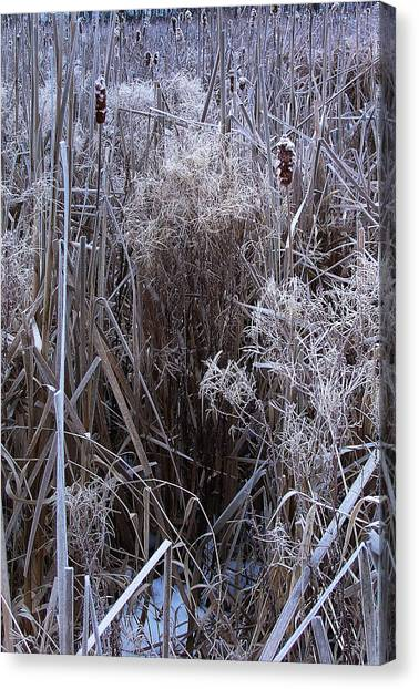 Seasonal Stand Of A Marsh Canvas Print by Terrance DePietro
