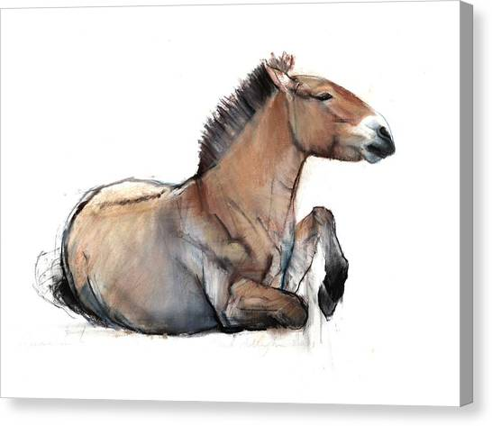 Wild Horse Canvas Print - Seated Przewalski, 2011, Charcoal, Conté And Pastel On Paper by Mark Adlington