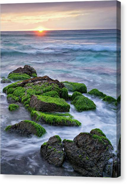 Seaweed, Granite And Blue Water Canvas Print by Peter G Knott