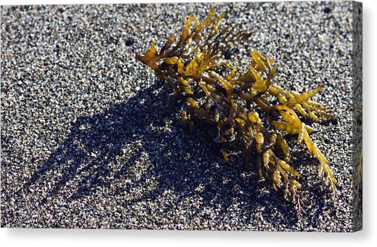 Seaweed Shadow Canvas Print