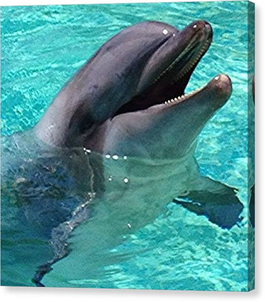 Dolphins Canvas Print - #seaworld #dolphin #nature #natgeohub by Jim Neeley