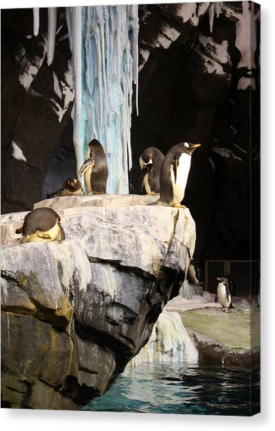 Seaworld Penguins Canvas Print