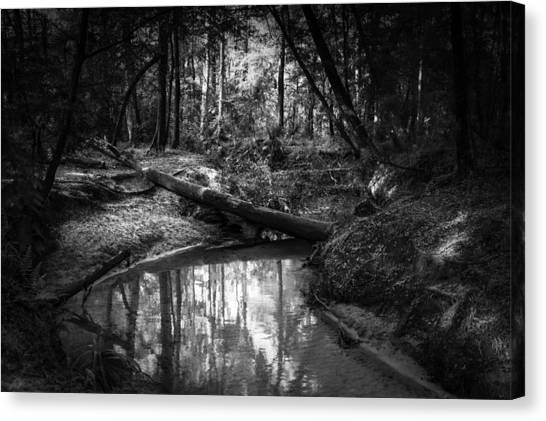 Secluded Creek Canvas Print