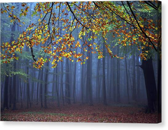 Foggy Forests Canvas Print - Seconds Before The Light Went Out by Roeselien Raimond