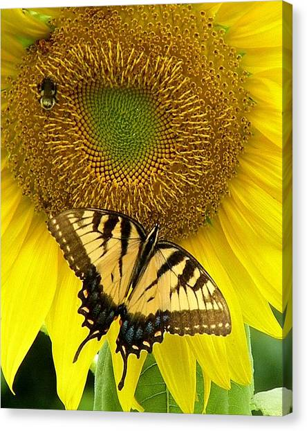 Secret Lives Of Sunflowers Canvas Print