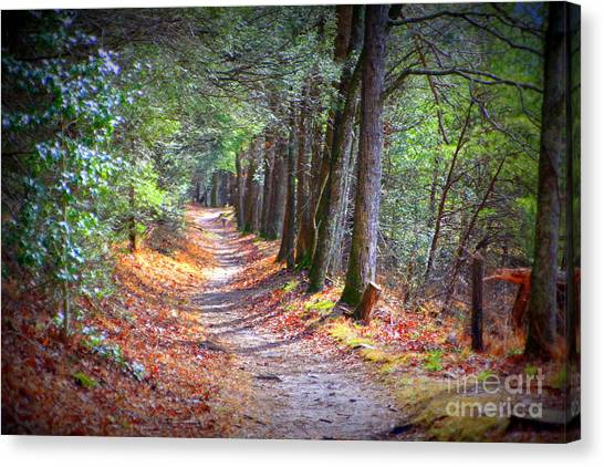 Secret Pathway 1 Canvas Print