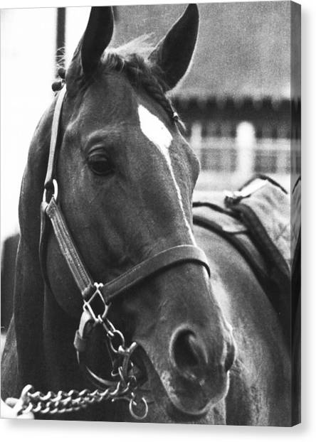 Thoroughbreds Canvas Print - Secretariat Vintage Horse Racing #02 by Retro Images Archive