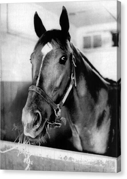 Secretariat Canvas Print - Secretariat Vintage Horse Racing #18 by Retro Images Archive