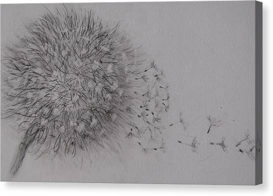 Seedhead Canvas Print by Anne Parker