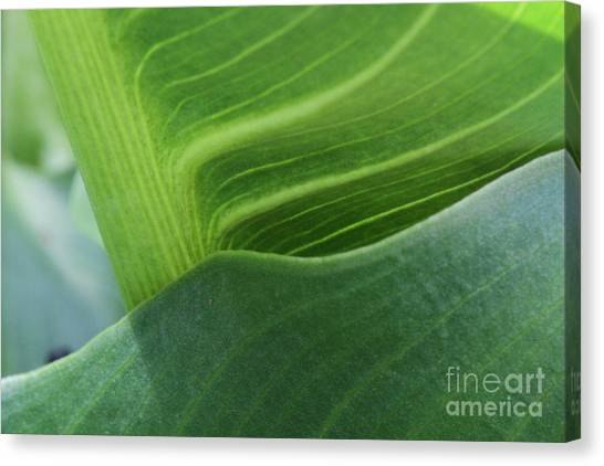 Seeing Green Canvas Print