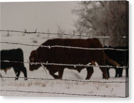 Seeking Shelter From The Cold Canvas Print