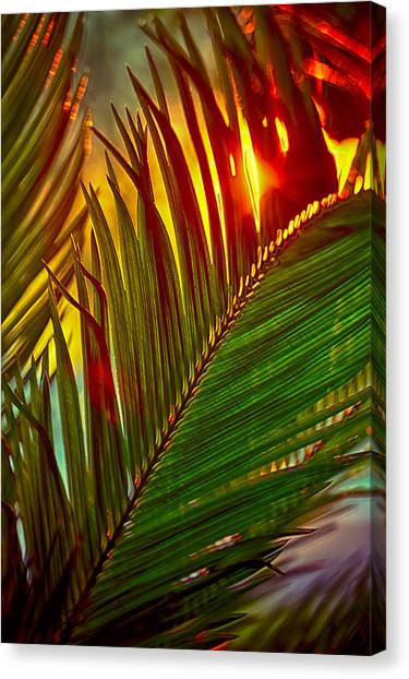 Fire Ball Canvas Print - Sego Frond Fire by Scott Campbell