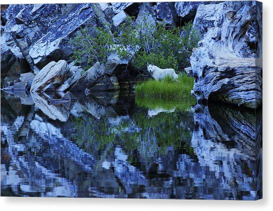 Canvas Print featuring the photograph Sekani Wild by Sean Sarsfield