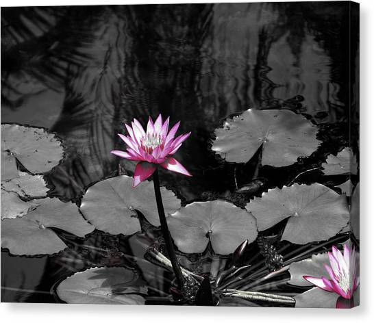 Selective Lily Canvas Print