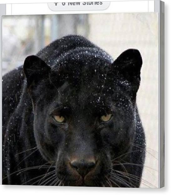 Panthers Canvas Print - Selena #selena #greatvoice #texas #jlo by Brandon Fisher