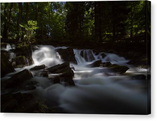 Mossy Forest Canvas Print - Selkefall by Andreas Levi