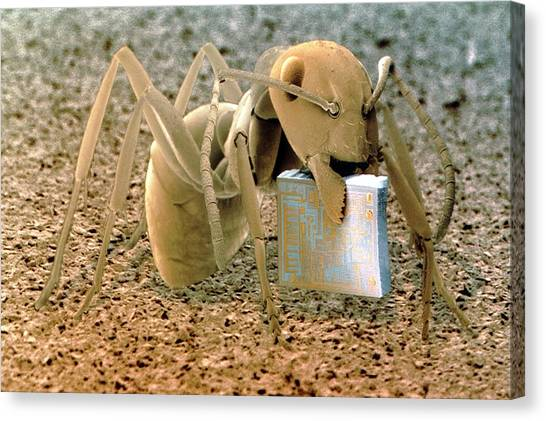 Ants Canvas Print - Sem Of Ant Holding A Microchip by Power And Syred