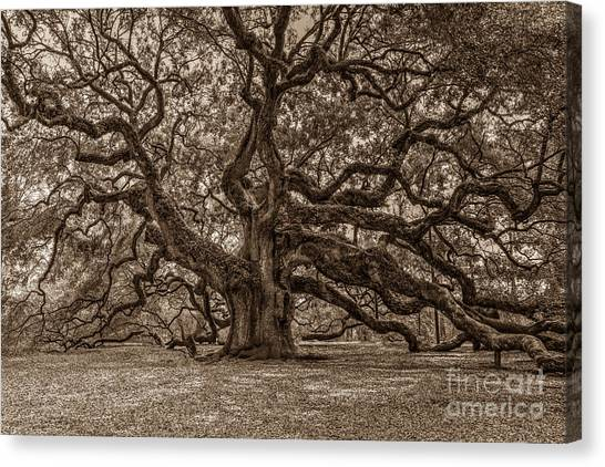 Sepia Angel Oak Canvas Print