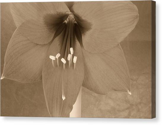 Canvas Print - Sepia Lily by Russell Wilson