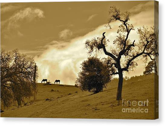 Sepia Of Two Horses Canvas Print