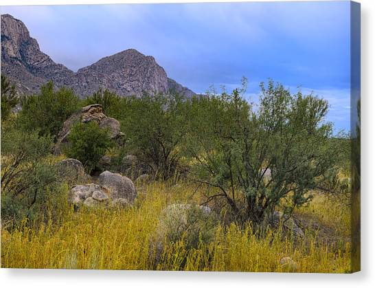 September Oasis No.1 Canvas Print
